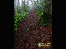Trail in the Mist